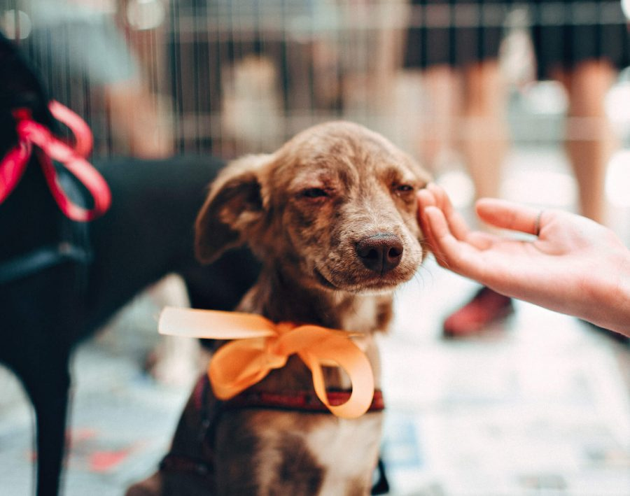 What To Do if Your Dog is Sad or Depressed